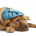 Flu & Your Pet