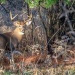 Deer Season Check List