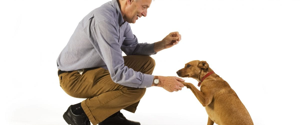 elderly man is his dog training obedience ** Note: Slight blurriness, best at smaller sizes