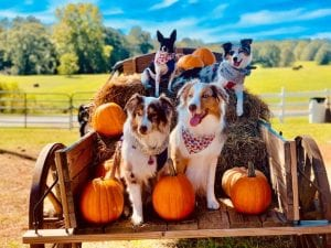 Furry Friends at The Great Pumpkin Patch