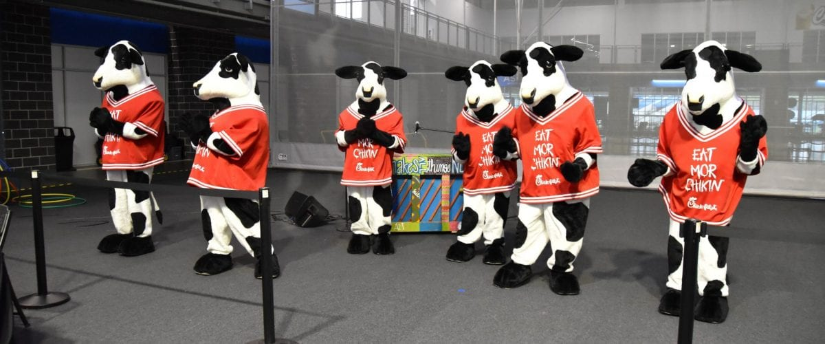 The Herd Vincenza Sciarabba Photo Cred 1