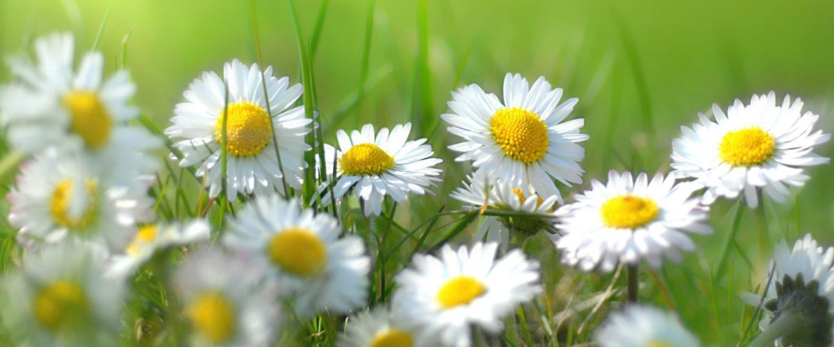bigstock Small spring flowers 17486753