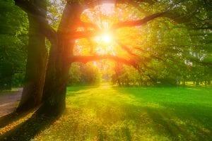Sunshine beaming through oak trees