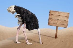 bigstock scared ostrich burying head in 73129960