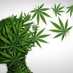 bigstock Marijuana Effects On The Brain 312760105